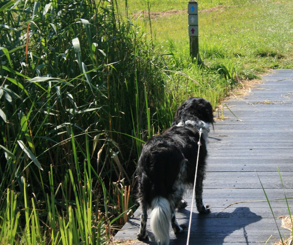 wandelen met de hond de Wieden